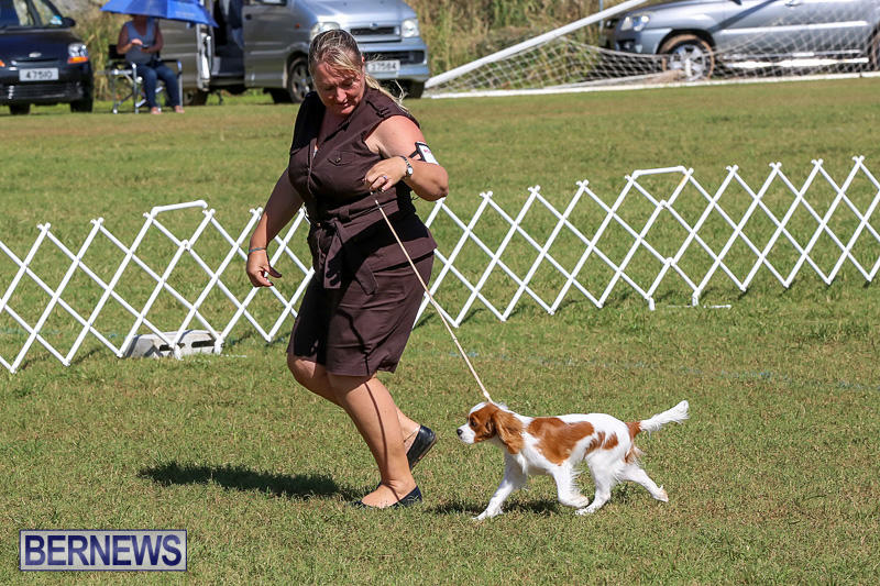 Bermuda-Kennel-Club-Dog-Show-October-23-2016-39