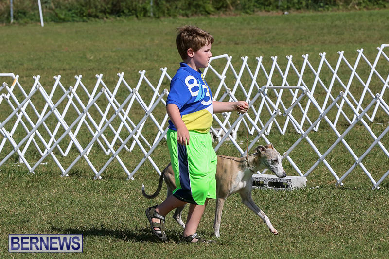 Bermuda-Kennel-Club-Dog-Show-October-23-2016-4