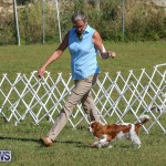 Bermuda Kennel Club Dog Show, October 23 2016-40