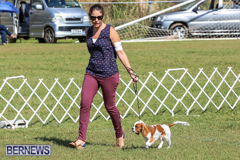 Bermuda-Kennel-Club-Dog-Show-October-23-2016-41