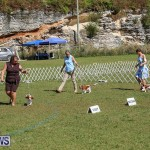 Bermuda Kennel Club Dog Show, October 23 2016-43