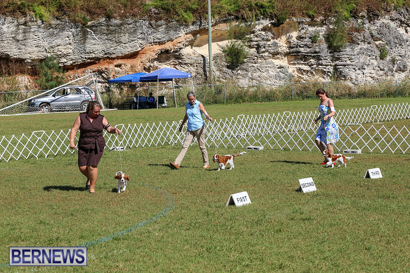 Bermuda-Kennel-Club-Dog-Show-October-23-2016-43