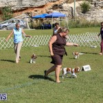 Bermuda Kennel Club Dog Show, October 23 2016-44