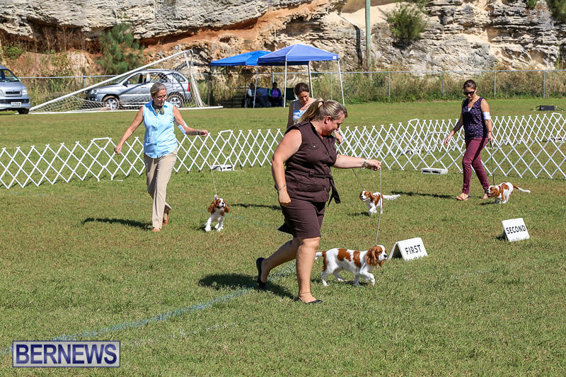 Bermuda-Kennel-Club-Dog-Show-October-23-2016-44
