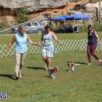Bermuda Kennel Club Dog Show, October 23 2016-45