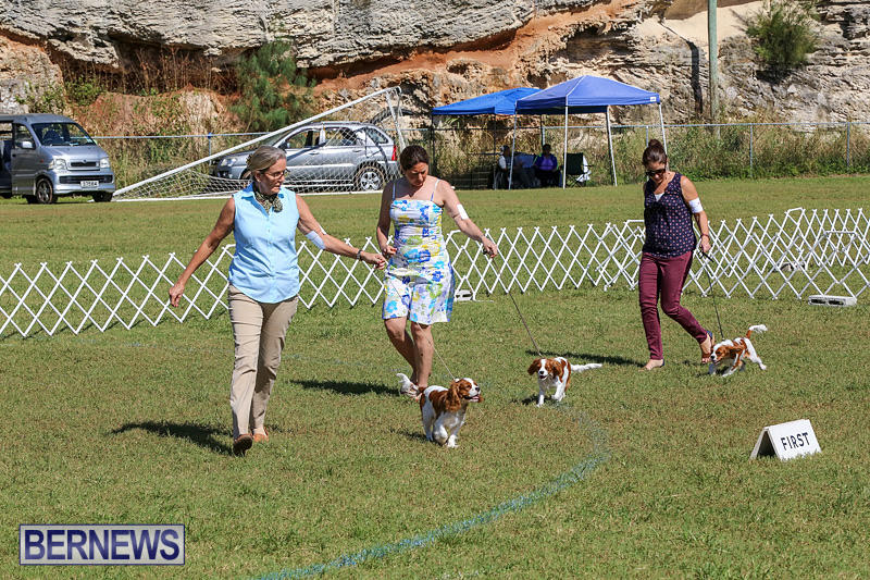 Bermuda-Kennel-Club-Dog-Show-October-23-2016-45