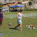 Bermuda Kennel Club Dog Show, October 23 2016-46