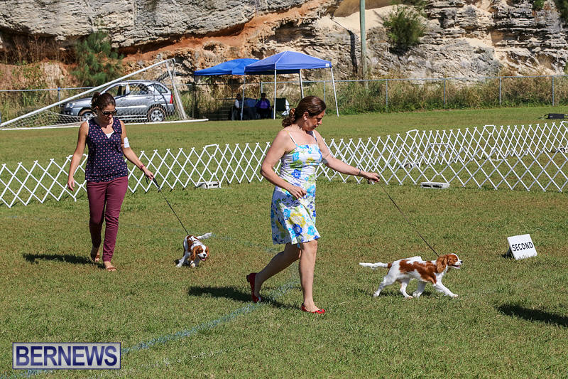 Bermuda-Kennel-Club-Dog-Show-October-23-2016-46