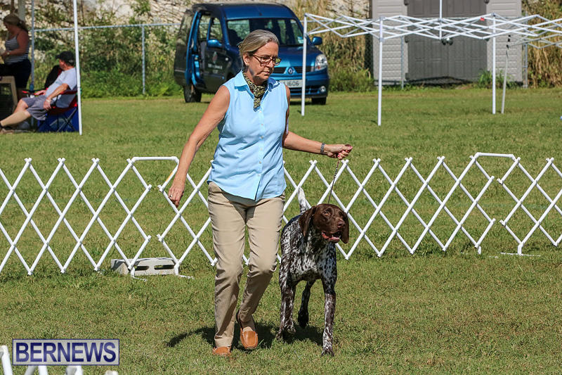 Bermuda-Kennel-Club-Dog-Show-October-23-2016-47