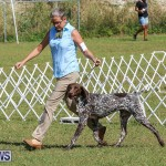 Bermuda Kennel Club Dog Show, October 23 2016-49