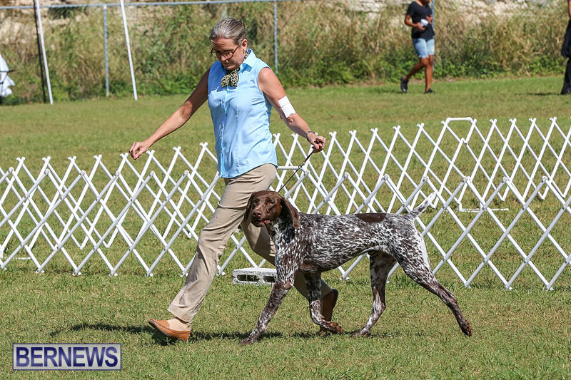 Bermuda-Kennel-Club-Dog-Show-October-23-2016-49