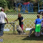 Bermuda Kennel Club Dog Show, October 23 2016-5