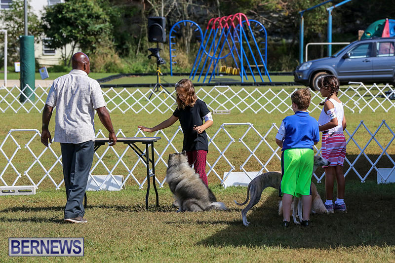 Bermuda-Kennel-Club-Dog-Show-October-23-2016-5