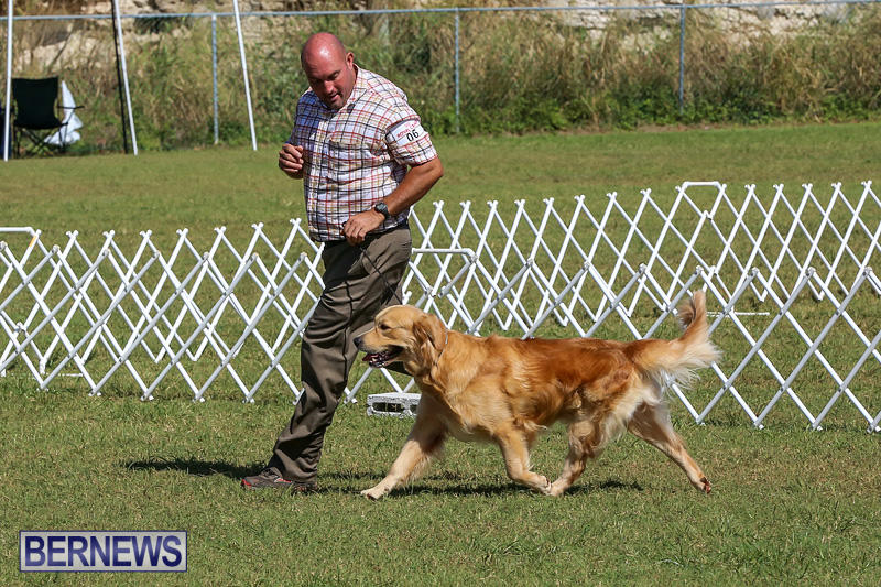 Bermuda-Kennel-Club-Dog-Show-October-23-2016-50