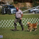 Bermuda Kennel Club Dog Show, October 23 2016-51