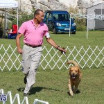 Bermuda Kennel Club Dog Show, October 23 2016-55