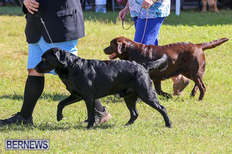 Bermuda-Kennel-Club-Dog-Show-October-23-2016-57