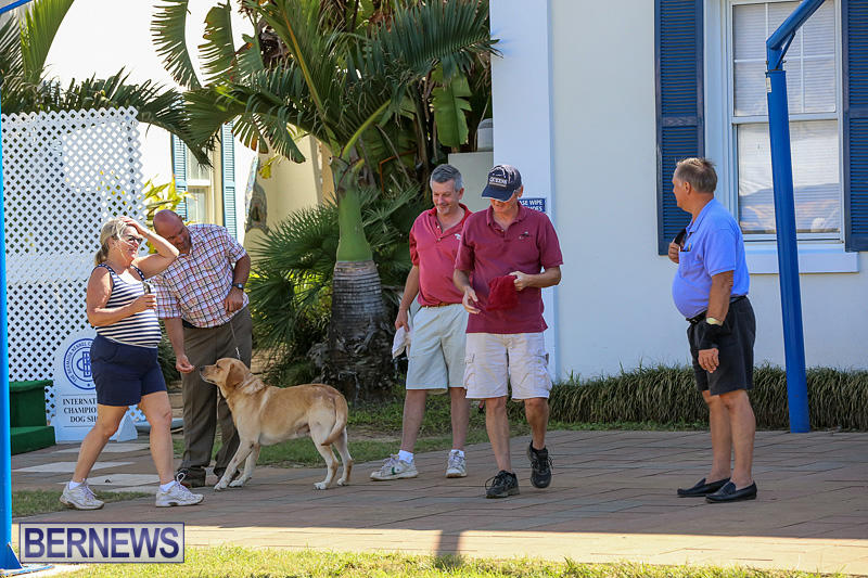 Bermuda-Kennel-Club-Dog-Show-October-23-2016-58