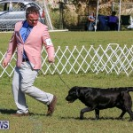 Bermuda Kennel Club Dog Show, October 23 2016-59