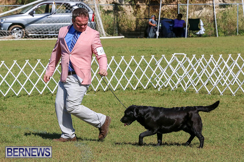 Bermuda-Kennel-Club-Dog-Show-October-23-2016-59