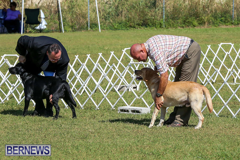 Bermuda-Kennel-Club-Dog-Show-October-23-2016-60