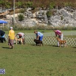 Bermuda Kennel Club Dog Show, October 23 2016-61
