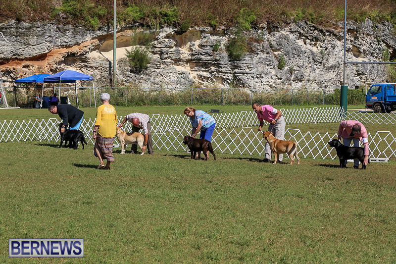 Bermuda-Kennel-Club-Dog-Show-October-23-2016-61