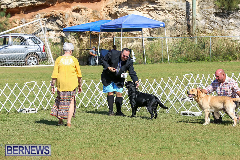 Bermuda-Kennel-Club-Dog-Show-October-23-2016-62