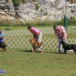 Bermuda Kennel Club Dog Show, October 23 2016-63
