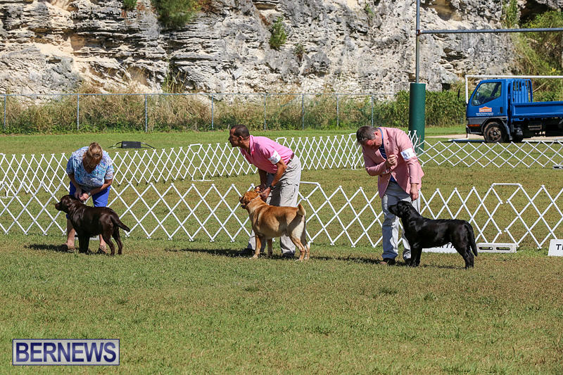 Bermuda-Kennel-Club-Dog-Show-October-23-2016-63