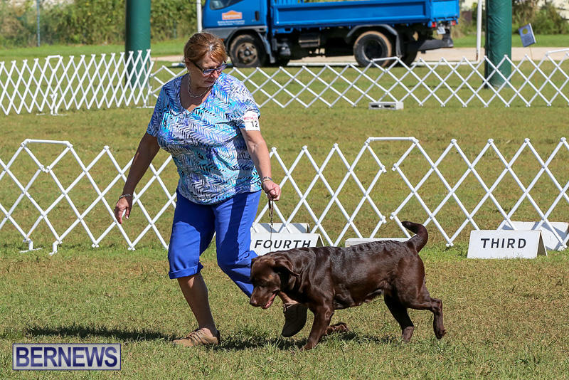 Bermuda-Kennel-Club-Dog-Show-October-23-2016-64