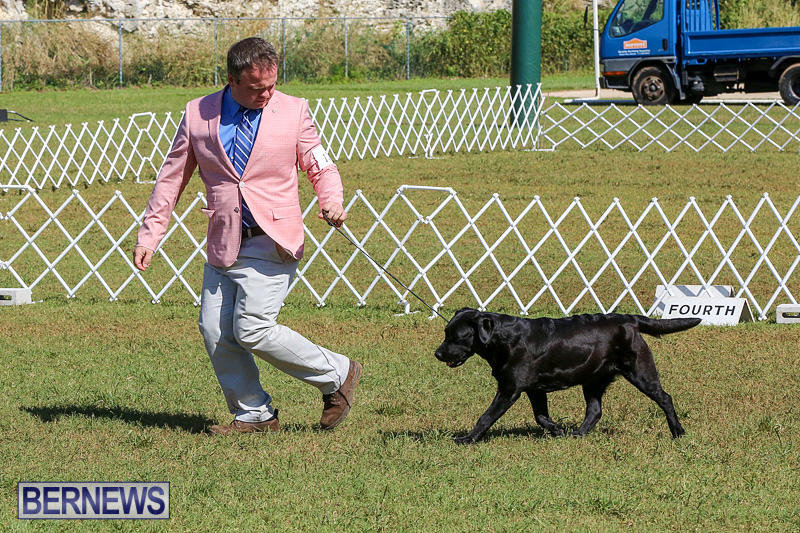 Bermuda-Kennel-Club-Dog-Show-October-23-2016-66