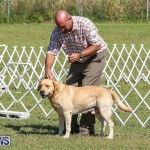 Bermuda Kennel Club Dog Show, October 23 2016-67