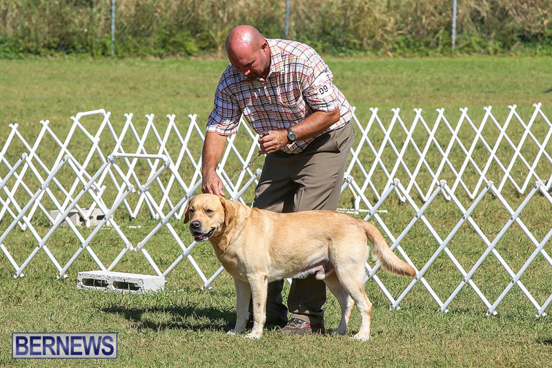 Bermuda-Kennel-Club-Dog-Show-October-23-2016-67