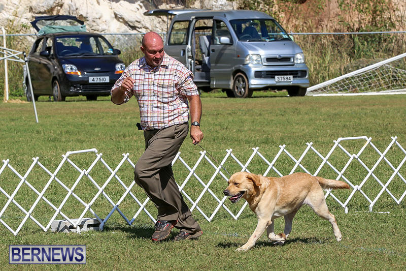 Bermuda-Kennel-Club-Dog-Show-October-23-2016-68