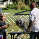 Bermuda Kennel Club Dog Show, October 23 2016-7