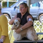 Bermuda Kennel Club Dog Show, October 23 2016-71