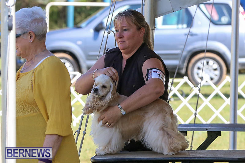 Bermuda-Kennel-Club-Dog-Show-October-23-2016-71