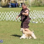 Bermuda Kennel Club Dog Show, October 23 2016-73