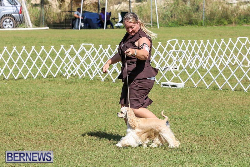 Bermuda-Kennel-Club-Dog-Show-October-23-2016-73
