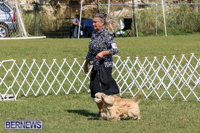 Bermuda-Kennel-Club-Dog-Show-October-23-2016-75