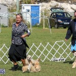 Bermuda Kennel Club Dog Show, October 23 2016-76