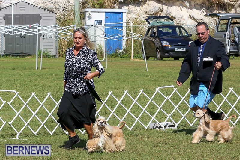 Bermuda-Kennel-Club-Dog-Show-October-23-2016-76