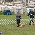 Bermuda Kennel Club Dog Show, October 23 2016-77