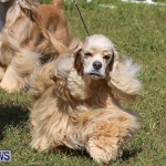 Bermuda Kennel Club Dog Show, October 23 2016-79