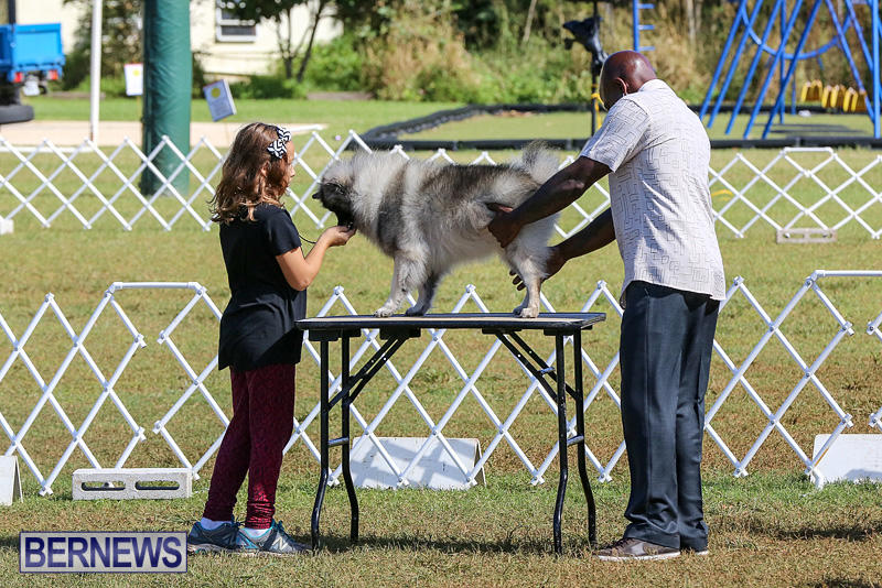 Bermuda-Kennel-Club-Dog-Show-October-23-2016-8
