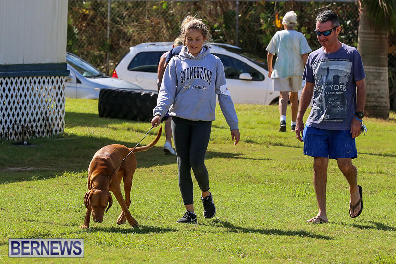 Bermuda-Kennel-Club-Dog-Show-October-23-2016-87