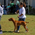 Bermuda Kennel Club Dog Show, October 23 2016-88