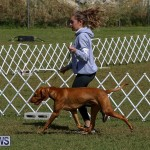 Bermuda Kennel Club Dog Show, October 23 2016-89