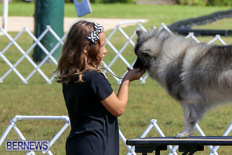 Bermuda-Kennel-Club-Dog-Show-October-23-2016-9